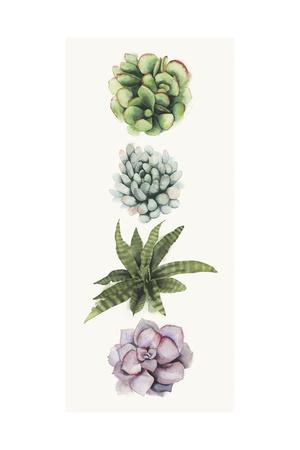 Row of Succulents II Print by Grace Popp