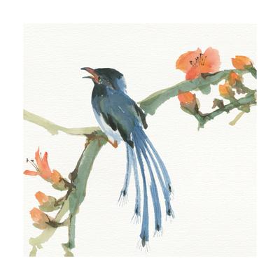 Formosan Blue Magpie Kunst af Chris Paschke
