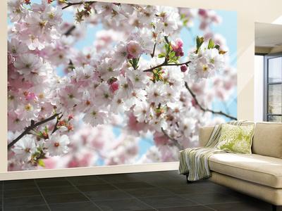Spring Wallpaper Mural