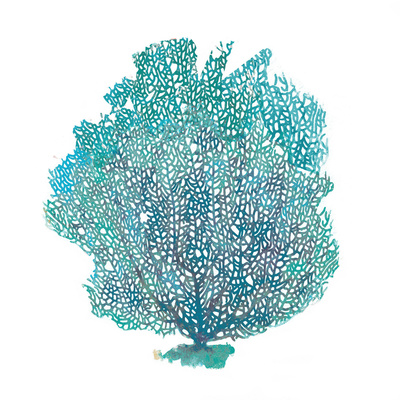 Teal Coral on White I Posters by Jairo Rodriguez