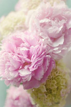 Soft Pink Blooms Arte por Sarah Gardner