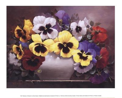 Rainbow of Pansies Print by Victor Santos