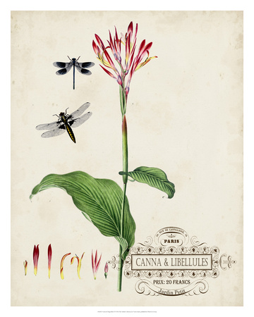 Canna & Dragonflies II Giclee Print by Vision Studio