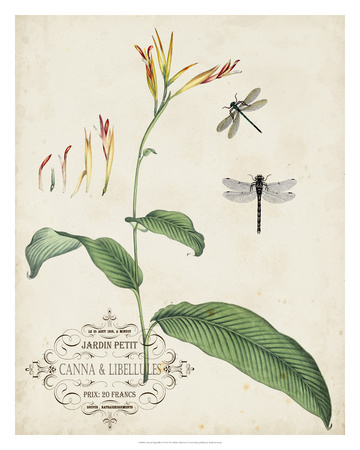 Canna & Dragonflies I Giclee Print by Vision Studio
