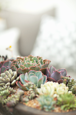Succulents Photographic Print by Karyn Millet