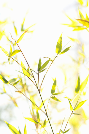 Bamboo I Photographic Print by Karyn Millet