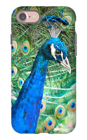Royally Blue II iPhone 7 Case by Gail Peck