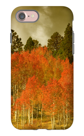 Portrait of Aspens in Autumn iPhone 7 Case by Vincent James