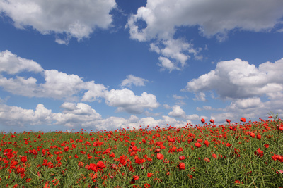 Schleswig-Holstein, Field with Poppies Photographic Print by Catharina Lux