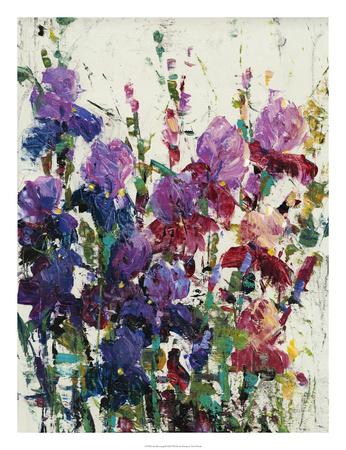 Iris Blooming II Premium Giclee Print by Tim OToole