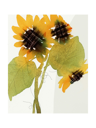 Watercolor Sunflowers with Leaves and Loops Prints