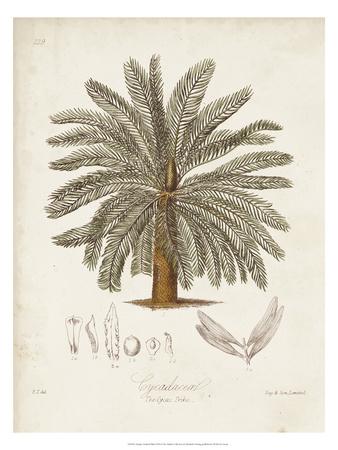 Antique Tropical Palm I Giclee Print by Elizabeth Twining