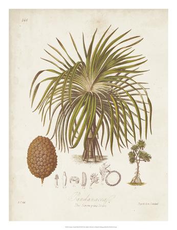 Antique Tropical Palm II Giclee Print by Elizabeth Twining