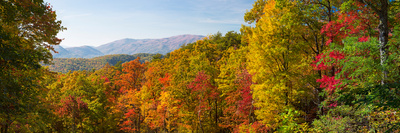 Trees in a Forest, Roaring Fork Motor Nature Trail, Great Smoky Mountains National Park Photographic Print by  Panoramic Images