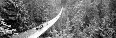 Capilano Bridge, Suspended Walk, Vancouver, British Columbia, Canada Photographic Print by  Panoramic Images