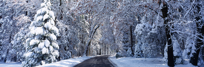 Road Passing Through Snowy Forest in Winter, Yosemite National Park, California, USA Photographic Print by  Panoramic Images