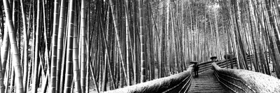 Stepped Walkway Passing Through a Bamboo Forest, Arashiyama, Kyoto Prefecture, Kinki Region Photographic Print by  Panoramic Images