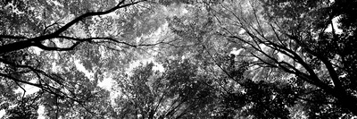 Low Angle View of Trees Photographic Print by  Panoramic Images