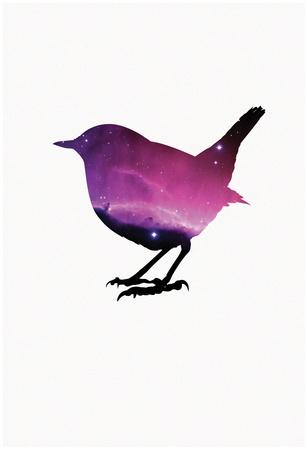 Robin Nebula Póster