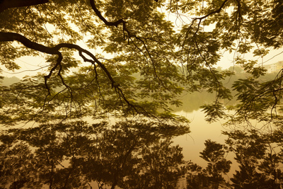 Vietnam, Ha Noi, Hoan Kiem Lake. a Huge Tree Hangs Low over the Still Waters of Hoan Kiem Lake. Fotografie-Druck von Niels Van Gijn