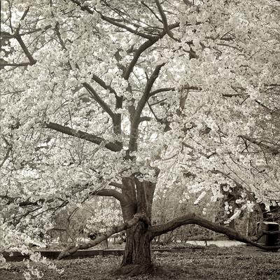 Hamption Magnolia II Photographic Print by Alan Blaustein