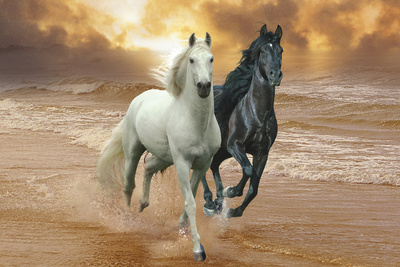 Dream Horses 046 Photographic Print by Bob Langrish