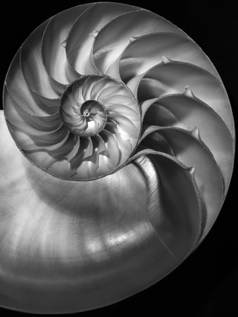 Nautilus 3-2 Photographic Print by Moises Levy