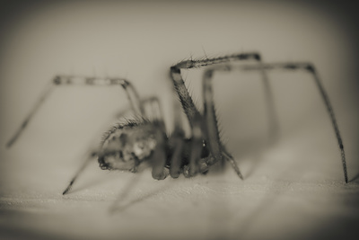 Spider 2 Photographic Print by  Pixie Pics