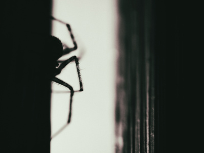 Spider 3 Photographic Print by  Pixie Pics