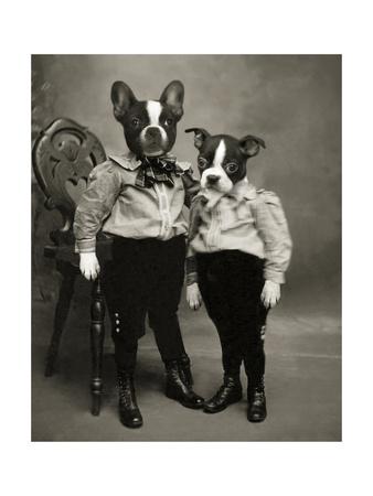 Boston Terriers Giclee Print by  J Hovenstine Studios