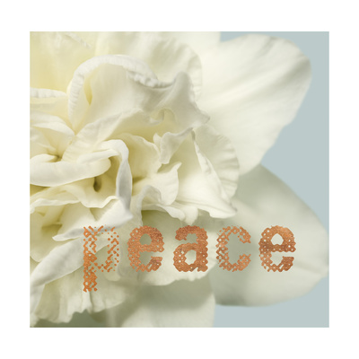 Peace Blossom Posters by Julie Greenwood