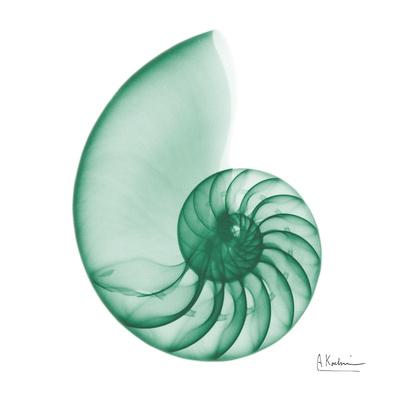 Jade Water Snail 2 Posters by Albert Koetsier