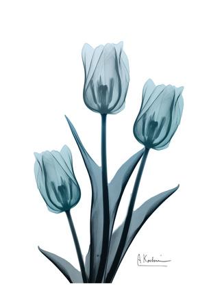 Midnight Sky Tulip Trio 2 Posters by Albert Koetsier