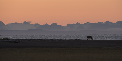 Silhouette of a Brown Bear at Silver Salmon Creek Lodge in Lake Clark National Park Photographic Print by Charles Smith