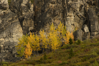Fall Foliage in Denali National Park, Alaska Photographic Print by Charles Smith