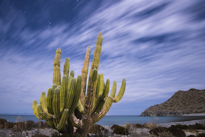 A Cactus Stands Along the Edge of the Ocean Fotografisk tryk af Michael Melford