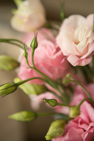 Pink Blossoms II Posters by Karyn Millet