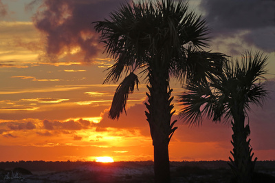 Sunset Palms II Prints by Alex Williams