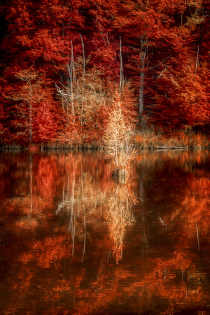 My Favorite Things Lámina fotográfica por Philippe Sainte-Laudy
