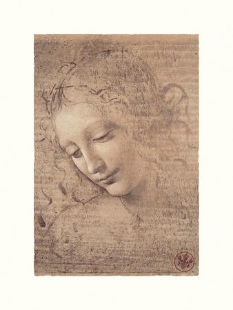 Testa Di Faniciulla Detta Giclee Print by Leonardo Da Vinci