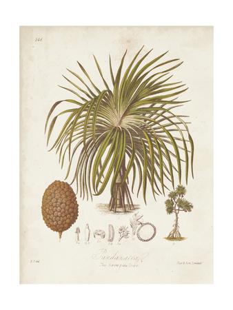 Antique Tropical Palm II Print by Elizabeth Twining