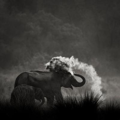 Mud Bath Photographic Print by Ganesh H Shankar