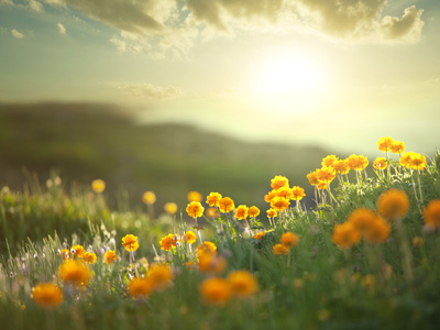 Meadow at Morning Photographic Print by  Kamchatka