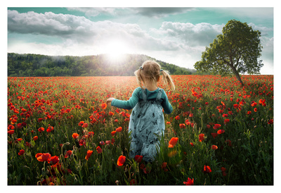 Into the Poppies Prints by John Wilhelm