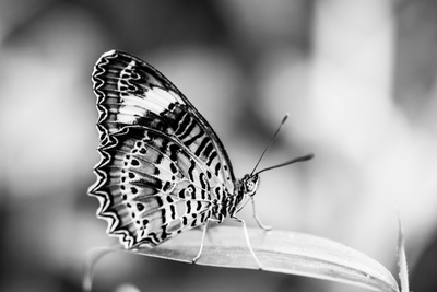 Beautiful Close Up of a Butterfly in the Garden Photographic Print by Mohana AntonMeryl
