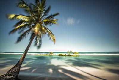 Palm Tree and Shadows on a Tropical Beach, Praia Dos Carneiros, Brazil Photographic Print by  Dantelaurini