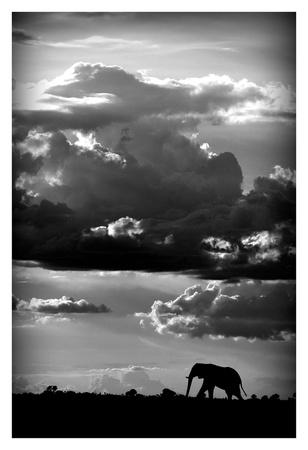 He walks under an African Sky Posters by  WildPhotoArt