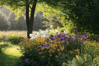 Summer Flower Adourn a Farm Garden Stretched Canvas Print by Kenneth Ginn