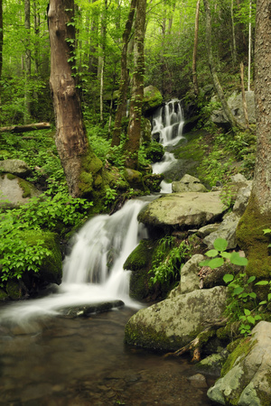Scenic View of a Smoky Mountains Waterfall and Forest Opspændt lærredstryk af Darlyne A. Murawski