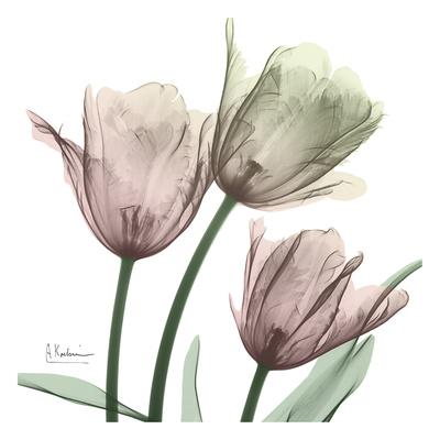 Natural Luster Tulips 1 Posters by Albert Koetsier